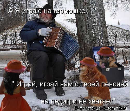 """Котоматрица: """" А Я играю на гармошке....""""  """" Играй, играй нам с твоей пенсией  на педигри не хватает"""""""