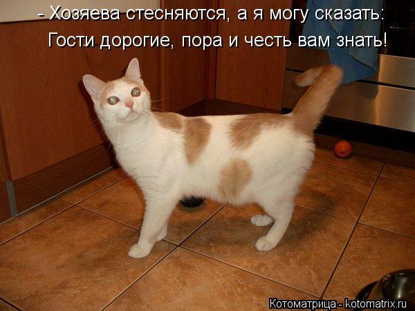 Котоматрица: - Хозяева стесняются, а я могу сказать: Гости дорогие, пора и честь вам знать!