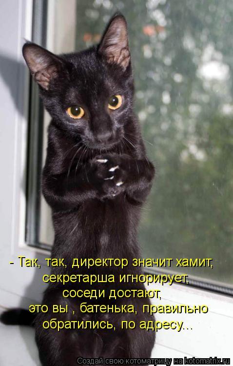 Котоматрица: - Так, так, директор значит хамит, секретарша игнорирует, соседи достают, это вы , батенька, правильно обратились, по адресу...