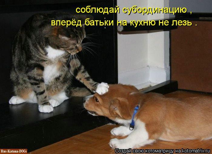 Котоматрица: соблюдай субординацию ,  вперёд батьки на кухню не лезь .