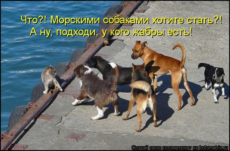 Котоматрица: Что?! Морскими собаками хотите стать?! А ну, подходи, у кого жабры есть!