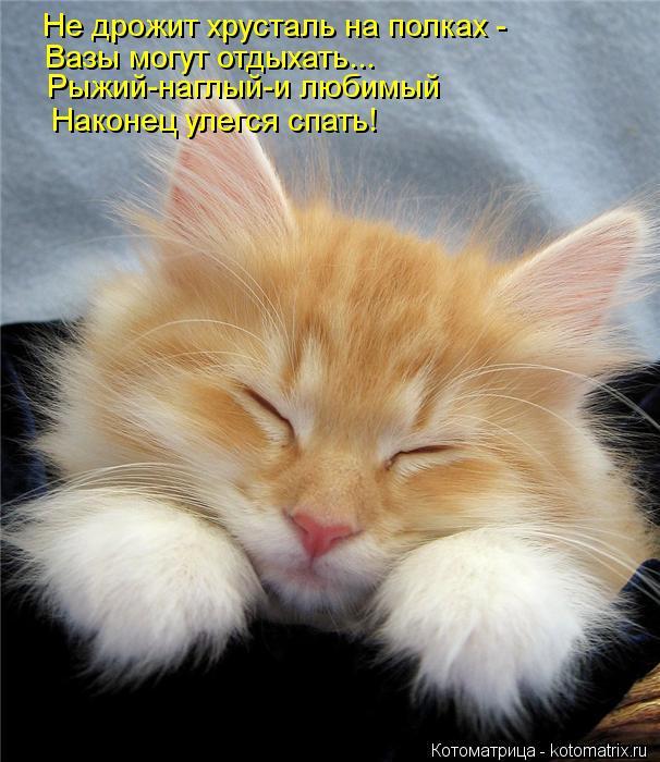 Котоматрица: Не дрожит хрусталь на полках -  Вазы могут отдыхать... Рыжий-наглый-и любимый Наконец улегся спать!