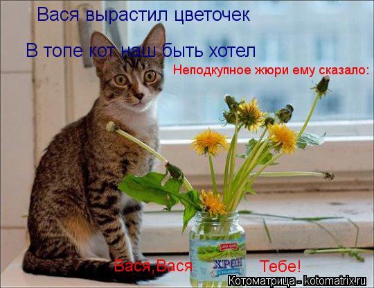 Котоматрица: В топе кот наш быть хотел Вася вырастил цветочек Неподкупное жюри ему сказало: Вася,Вася Тебе!