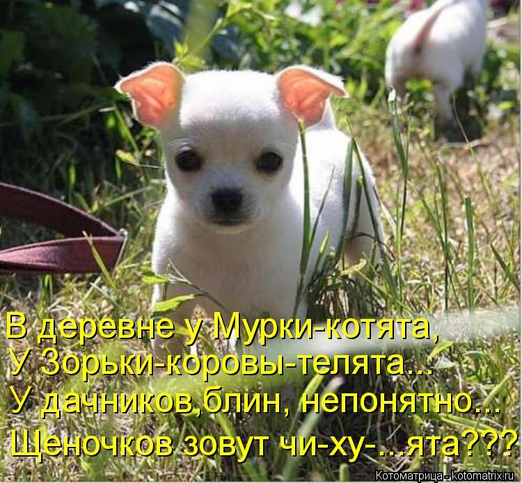 Котоматрица: В деревне у Мурки-котята, У Зорьки-коровы-телята... У дачников,блин, непонятно... Щеночков зовут чи-ху-...ята???