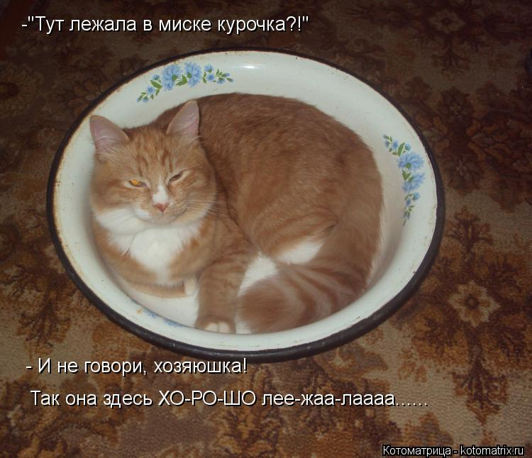 "Котоматрица: Так она здесь ХО-РО-ШО лее-жаа-лаааа...... - И не говори, хозяюшка! -""Тут лежала в миске курочка?!"""