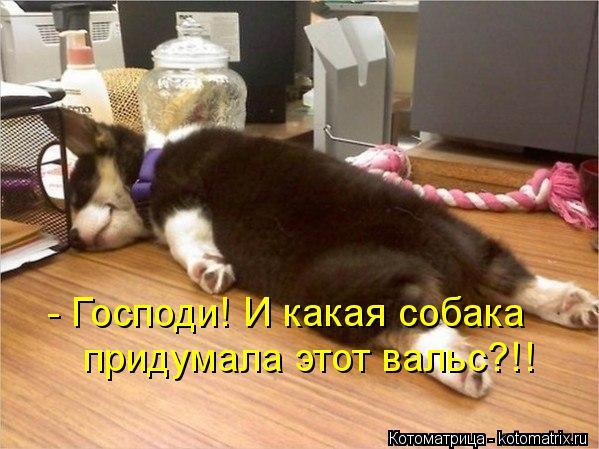 Котоматрица: - Господи! И какая собака  придумала этот вальс?!!