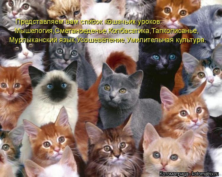 Котоматрица: Представляем вам список кошачьих уроков: Мышелогия,Сметаноеденье,Колбасатика,Тапкописанье, Мурлыканский язык,Усошевеление,Умилительная