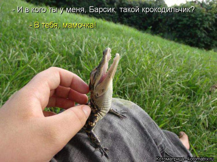 Котоматрица: - И в кого ты у меня, Барсик, такой крокодильчик? - В тебя, мамочка!