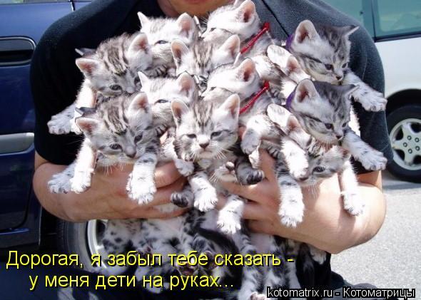 Котоматрица: Дорогая, я забыл тебе сказать - у меня дети на руках...