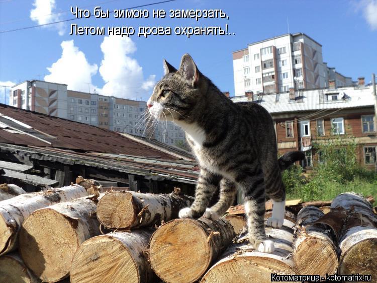 Котоматрица: Что бы зимою не замерзать, Летом надо дрова охранять!..