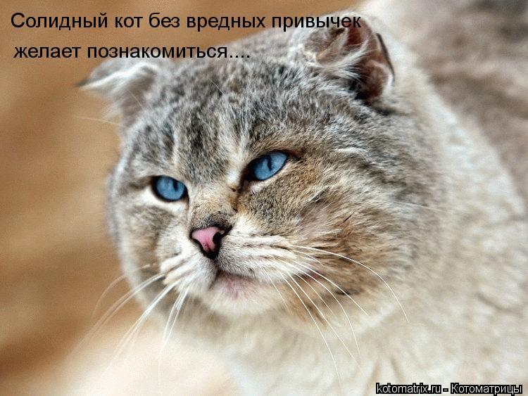 Котоматрица: Солидный кот без вредных привычек желает познакомиться....