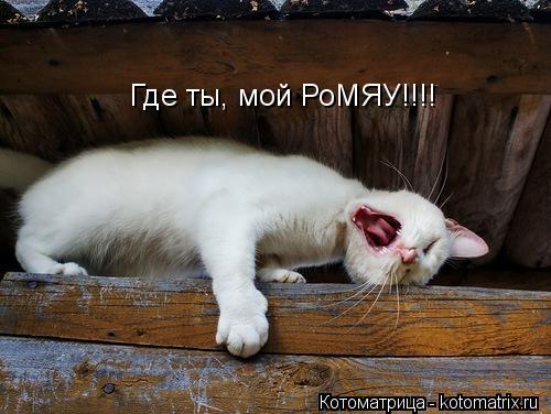Котоматрица: Где ты, мой РоМЯУ!!!!