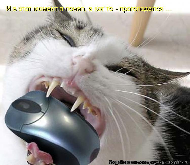 Котоматрица: И в этот момент я понял, а кот то - проголодался ...