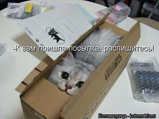 Котоматрица: -К вам пришла посылка, распишитесь!