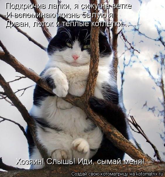 Котоматрица: Подкрючив лапки, я сижу на ветке И вспоминаю жизнь былую я Диван, лоток и теплые котлетки... Хозяин! Слышь! Иди, сымай меня!