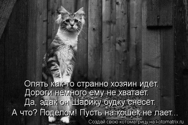 Котоматрица: Опять как-то странно хозяин идёт. Дороги немного ему не хватает. Да, эдак он Шарику будку снесёт. А что? Поделом! Пусть на кошек не лает...