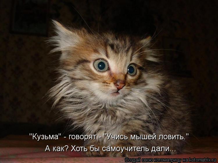 """Котоматрица: """"Кузьма"""" - говорят - """"Учись мышей ловить."""" А как? Хоть бы самоучитель дали..."""