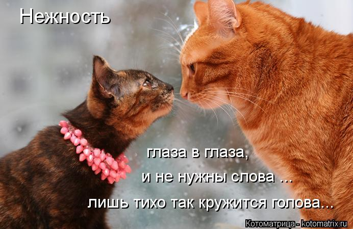 Котоматрица: Нежность глаза в глаза, и не нужны слова ... лишь тихо так кружится голова...