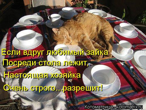 Котоматрица: Если вдруг любимый зайка Посреди стола лежит, Настоящая хозяйка Очень строго...разрешит!