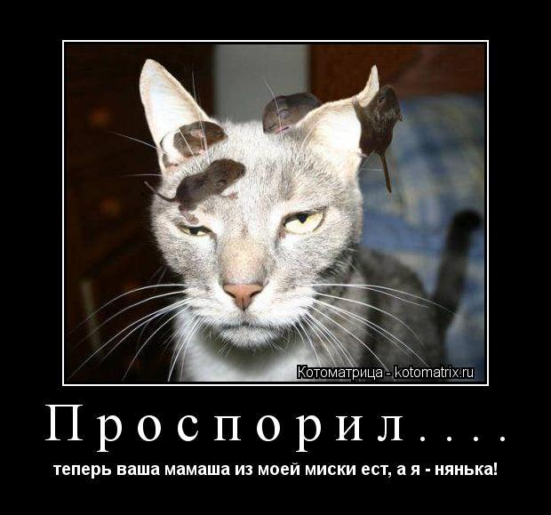 Котоматрица: Проспорил.... теперь ваша мамаша из моей миски ест, а я - нянька!