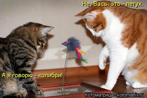 Котоматрица: Не, Вась, это - петух.  А я говорю - колибри!