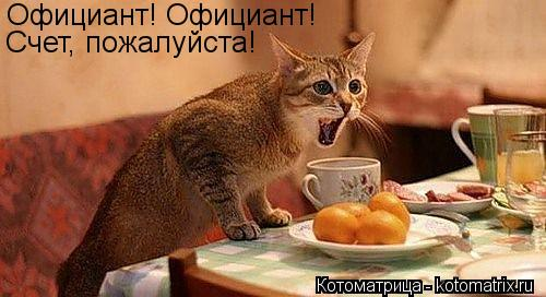 Котоматрица: Официант! Официант! Счет, пожалуйста!