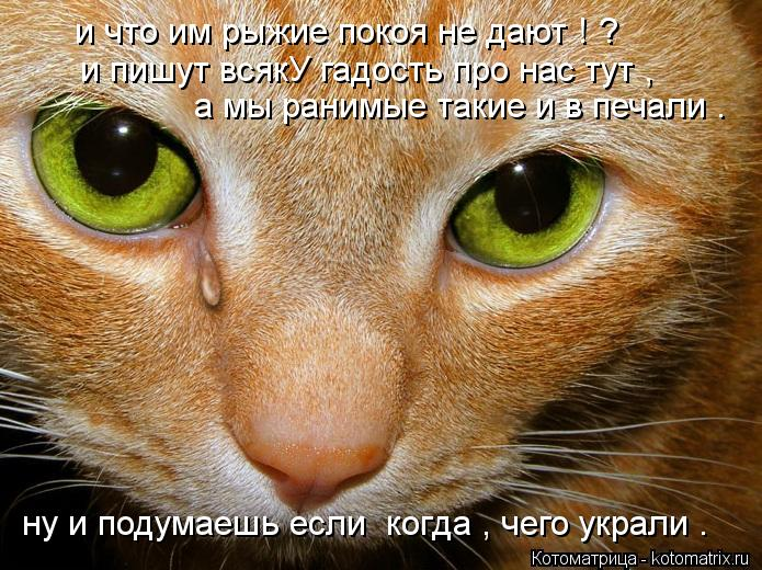 Котоматрица: и что им рыжие покоя не дают ! ? и пишут всякУ гадость про нас тут , а мы ранимые такие и в печали . ну и подумаешь если  когда , чего украли .