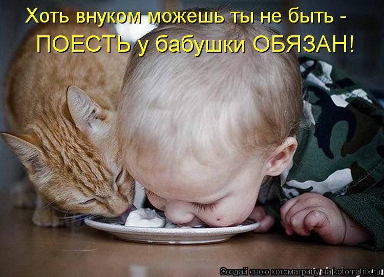 Котоматрица: Хоть внуком можешь ты не быть -  ПОЕСТЬ у бабушки ОБЯЗАН!