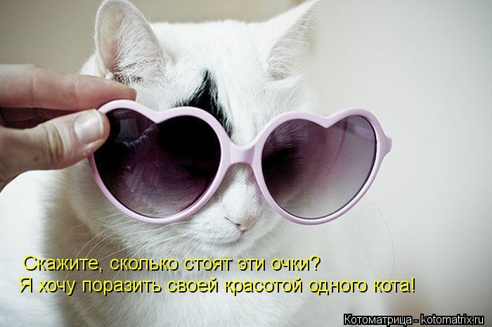 Котоматрица: Скажите, сколько стоят эти очки? Я хочу поразить своей красотой одного кота!
