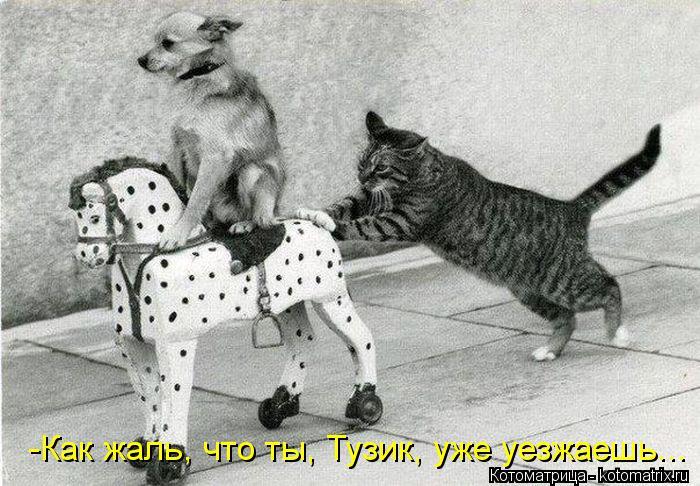 Котоматрица: -Как жаль, что ты, Тузик, уже уезжаешь...