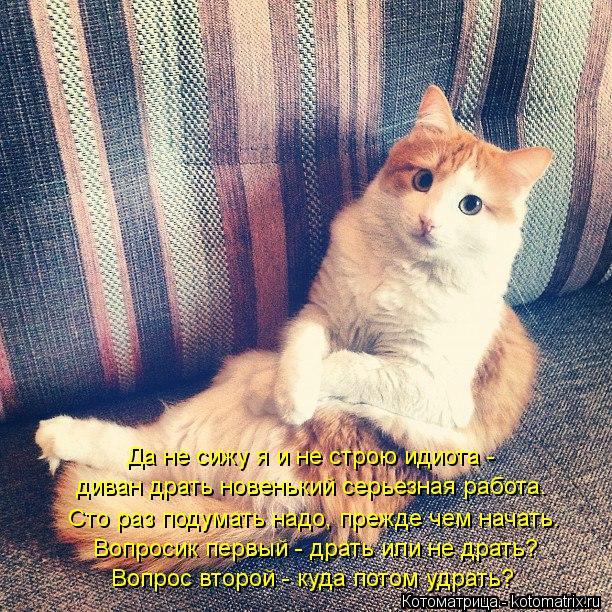 Котоматрица: Да не сижу я и не строю идиота -  диван драть новенький серьезная работа. Сто раз подумать надо, прежде чем начать. Вопросик первый - драть или