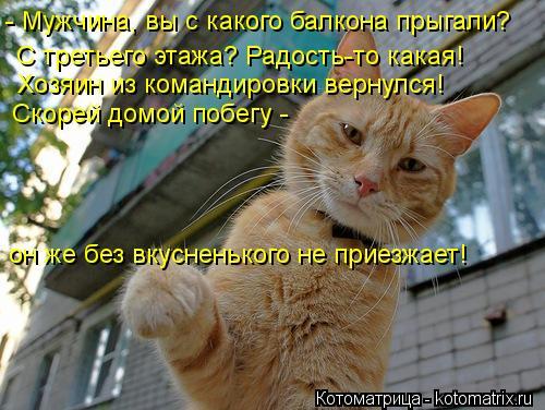 Котоматрица: - Мужчина, вы с какого балкона прыгали? С третьего этажа? Радость-то какая! Хозяин из командировки вернулся! Скорей домой побегу - он же без вк