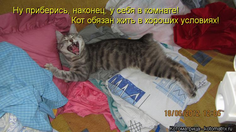 Котоматрица: Ну приберись, наконец, у себя в комнате! Кот обязан жить в хороших условиях!
