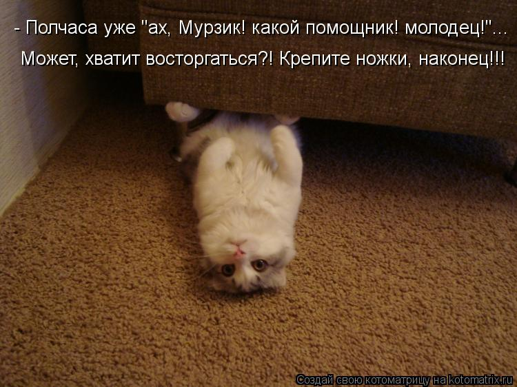 """Котоматрица: - Полчаса уже """"ах, Мурзик! какой помощник! молодец!""""... Может, хватит восторгаться?! Крепите ножки, наконец!!!"""