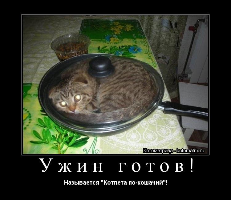 """Котоматрица: Ужин готов! Называется """"Котлета по-кошачий""""!"""