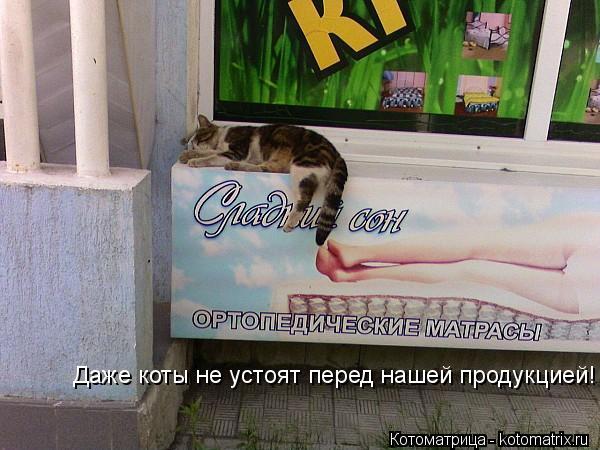 Котоматрица: Даже коты не устоят перед нашей продукцией!