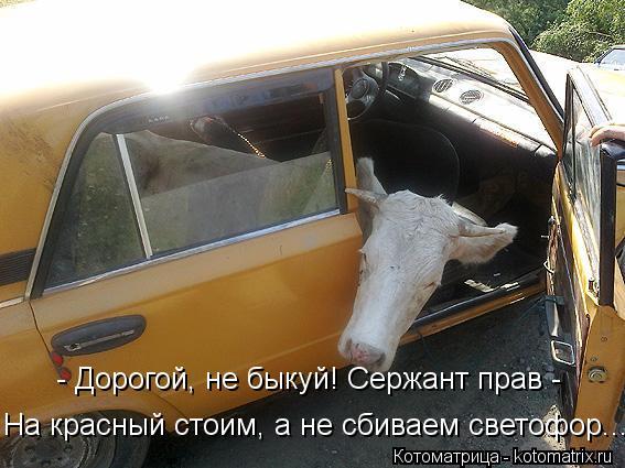 Котоматрица: - Дорогой, не быкуй! Сержант прав -  На красный стоим, а не сбиваем светофор...
