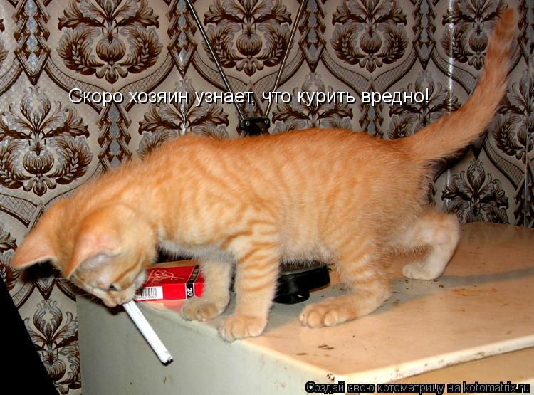 Котоматрица: Скоро хозяин узнает, что курить вредно!