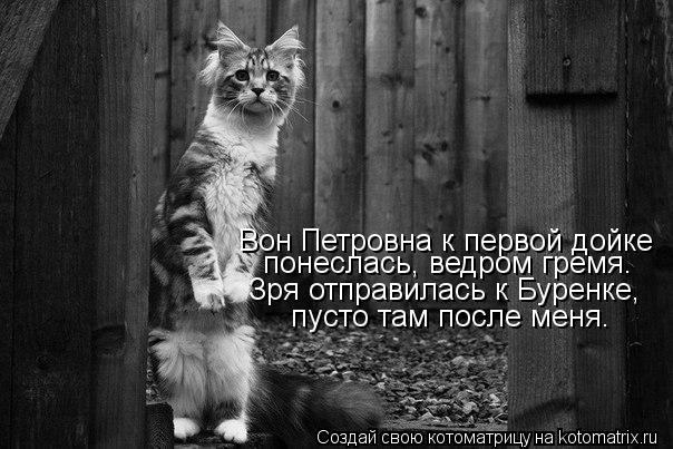 Котоматрица: Вон Петровна к первой дойке понеслась, ведром гремя. Зря отправилась к Буренке, пусто там после меня.