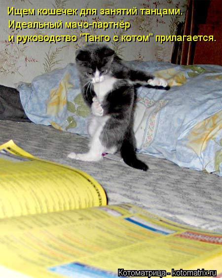 """Котоматрица: Идеальный мачо-партнёр  и руководство """"Танго с котом"""" прилагается. Ищем кошечек для занятий танцами."""