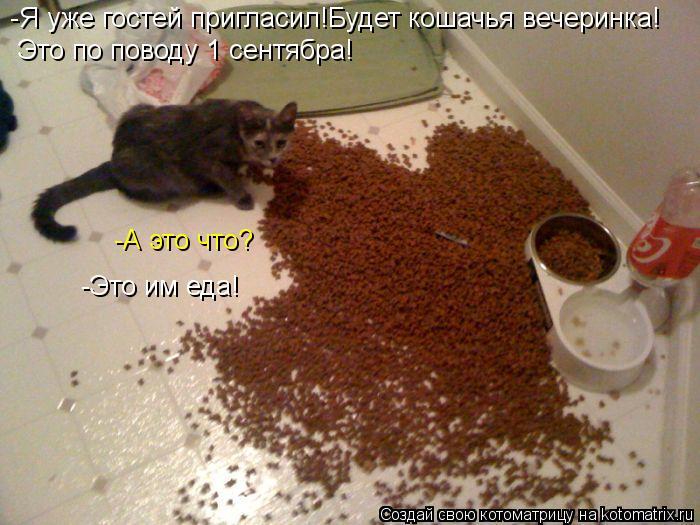 Котоматрица: -Я уже гостей пригласил!Будет кошачья вечеринка! Это по поводу 1 сентябра! -А это что? -Это им еда!