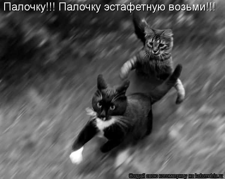 Котоматрица: Палочку!!! Палочку эстафетную возьми!!!