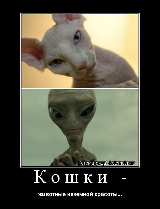 Котоматрица: Кошки -  животные неземной красоты...