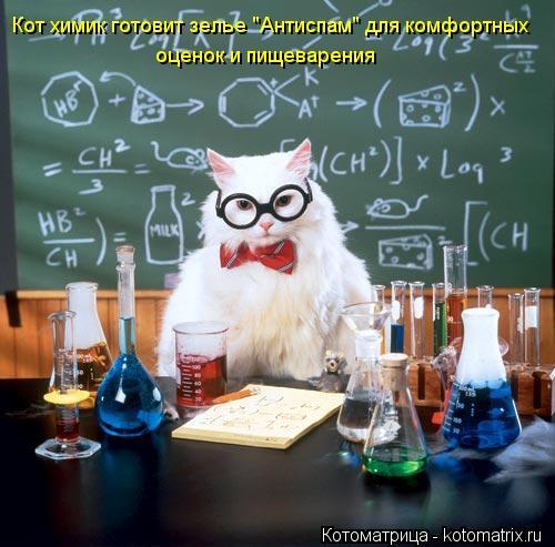 """Котоматрица: Кот химик готовит зелье """"Антиспам"""" для комфортных оценок и пищеварения"""