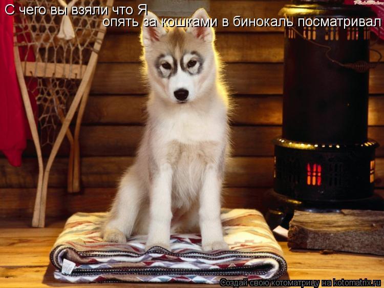 Котоматрица: С чего вы взяли что Я  опять за кошками в бинокаль посматривал
