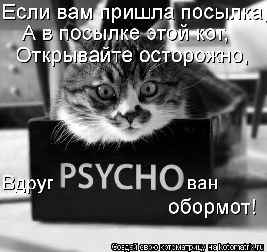 Котоматрица: Если вам пришла посылка, А в посылке этой кот, Открывайте осторожно, Вдруг                         ван обормот!