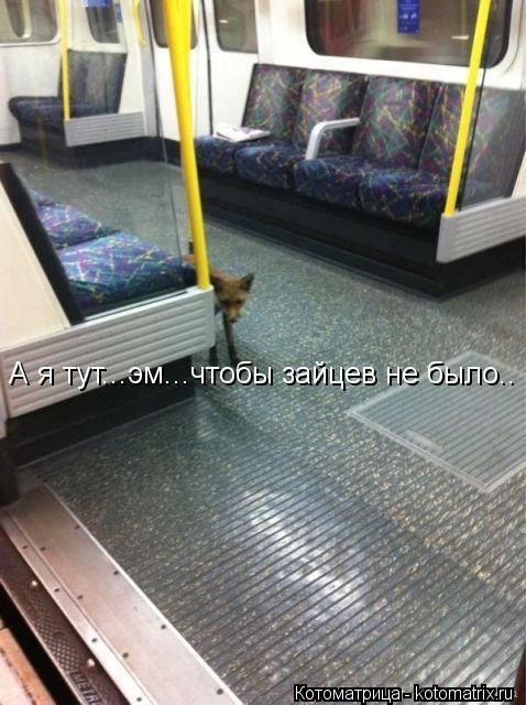 Котоматрица: А я тут...эм...чтобы зайцев не было..