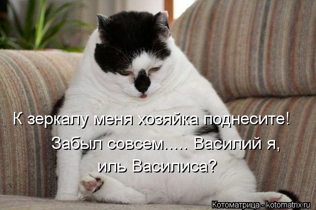 Котоматрица: К зеркалу меня хозяйка поднесите! иль Василиса? Забыл совсем..... Василий я,
