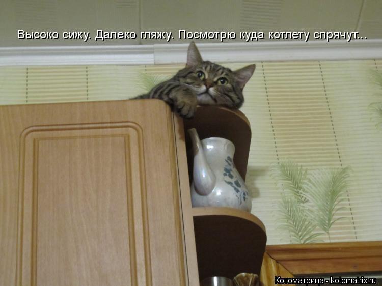 Котоматрица: Высоко сижу. Далеко гляжу. Посмотрю куда котлету спрячут...