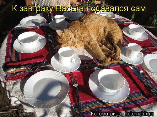 Котоматрица: К завтраку Васька подавался сам